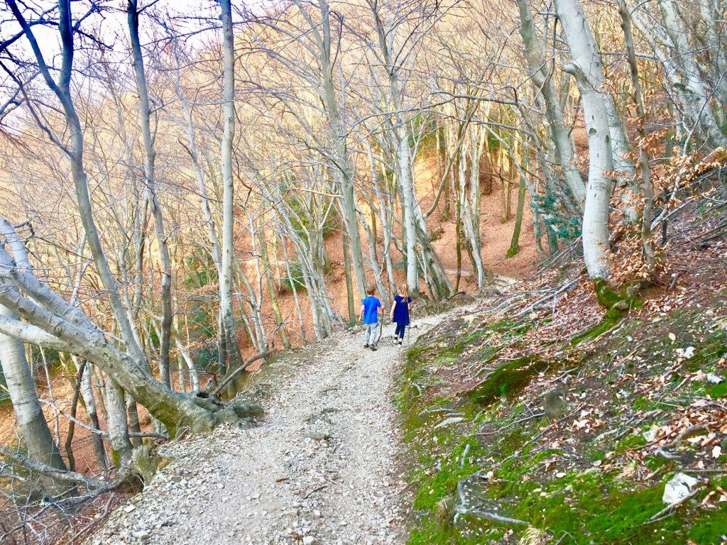 alpe vicania, sentiero