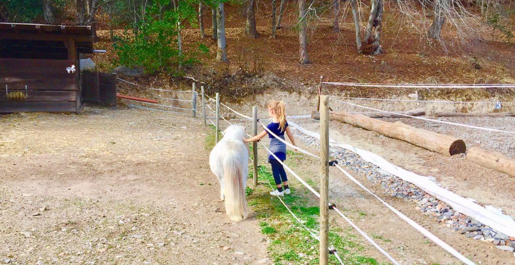 pony alpe vicania