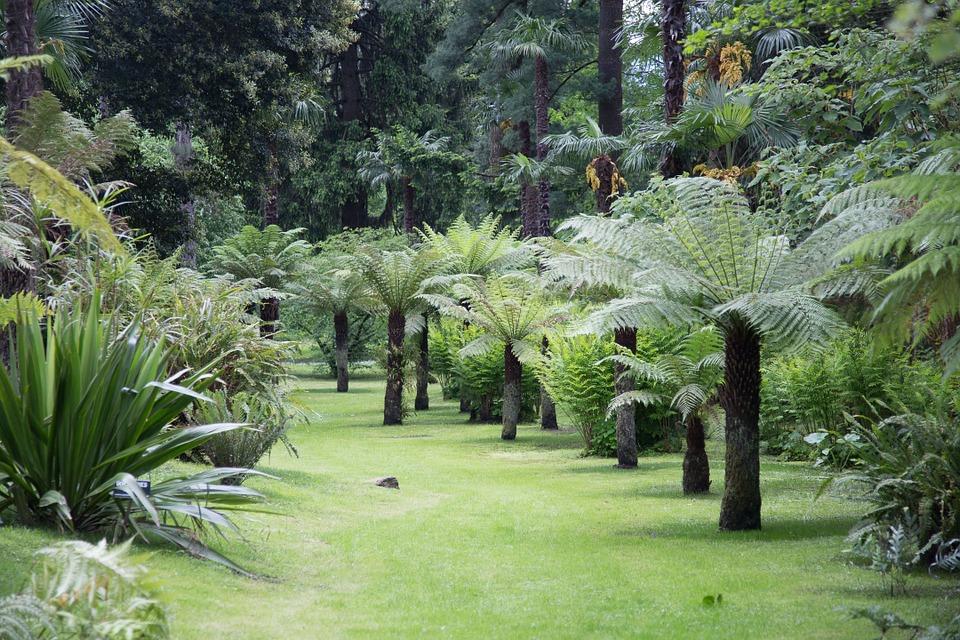 villa Taranto verbania, giardini botanici con palme