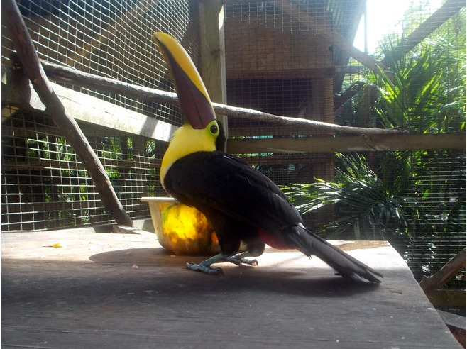 caraibi crociera: roatan tucano