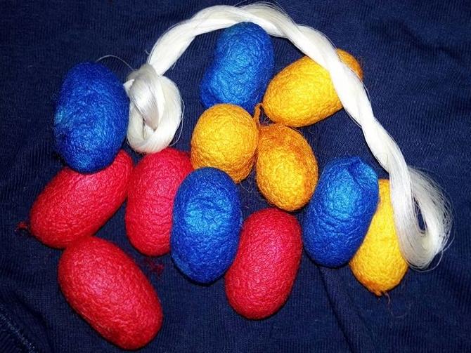 museo didattico della seta como, bozzoli colorati