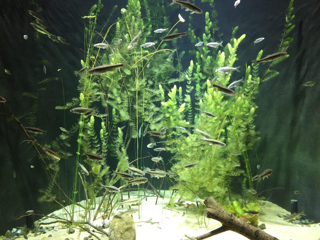 aquatis losanna pesci