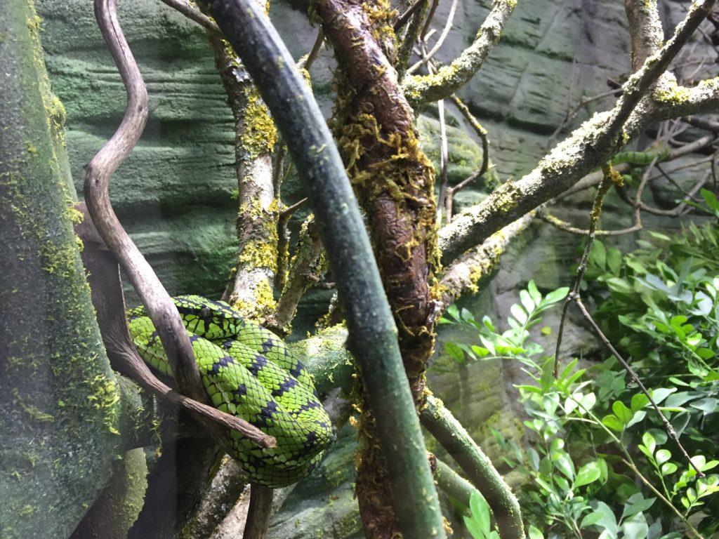 aquatis losanna serpente