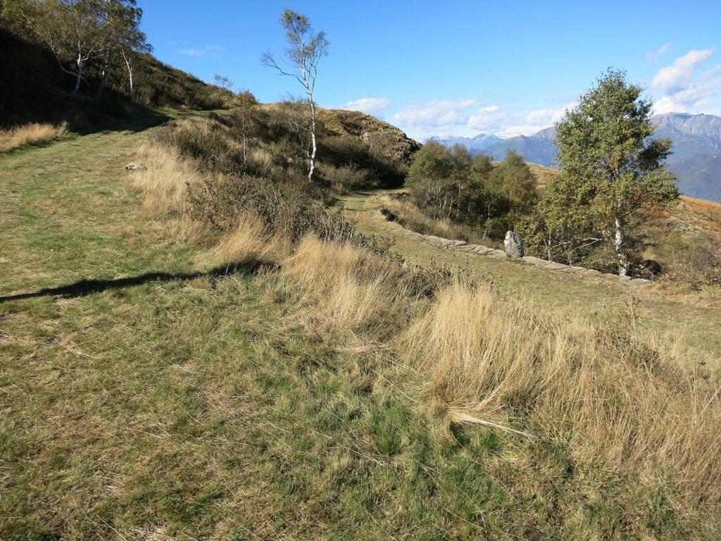 cime di Medeglia, sentiero