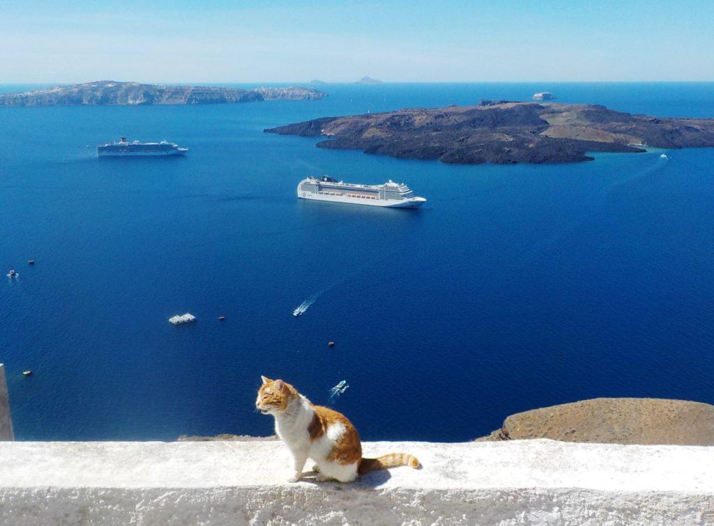 Santorini caldera view with cat