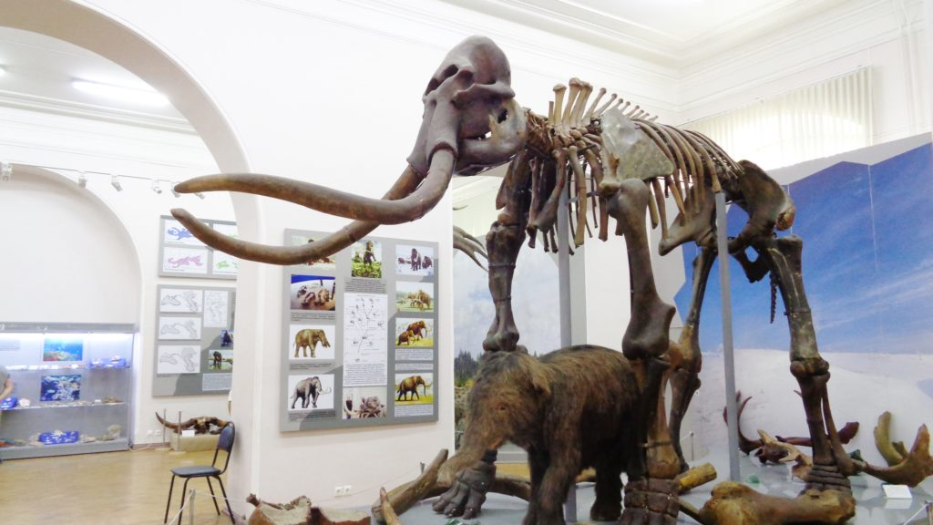 astrakhan museo storia naturale