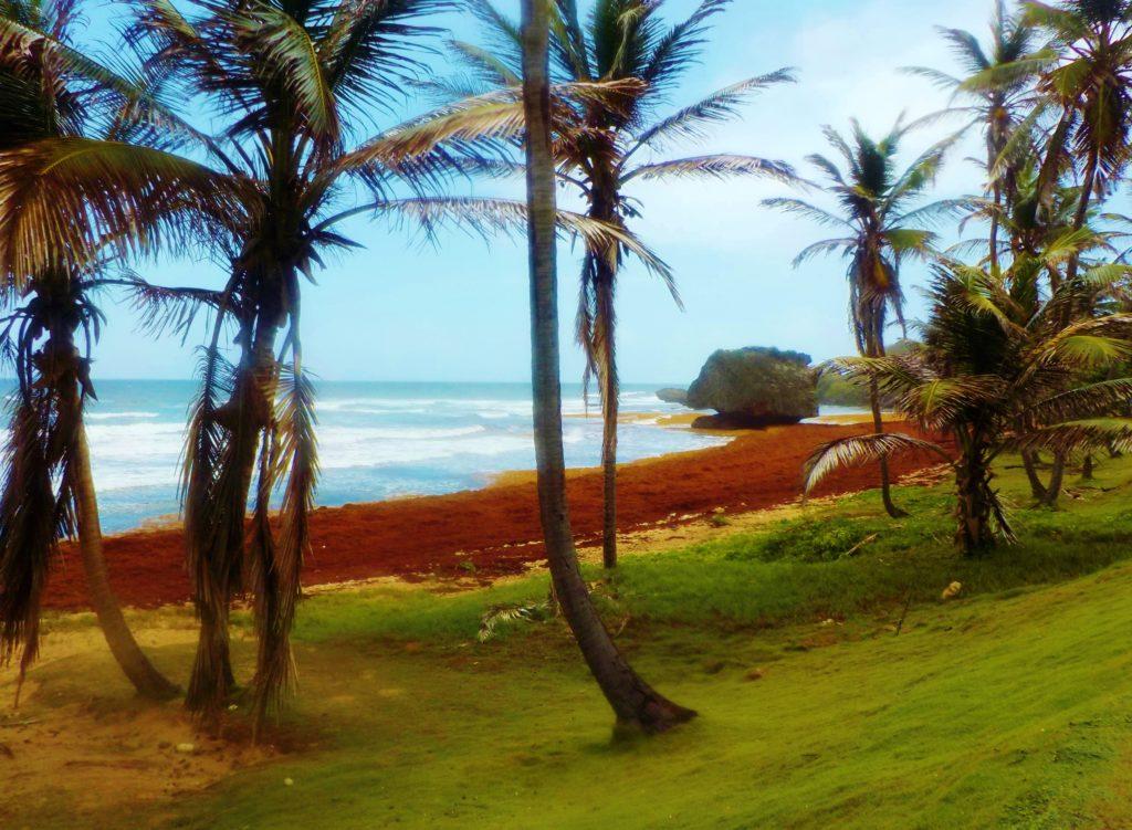 spiaggia per il surf