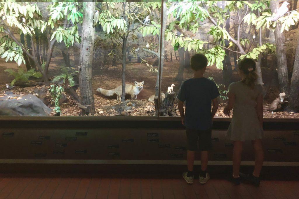 museo storia naturale lugano