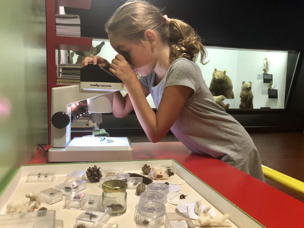 Piccoli dettagli al microscopio