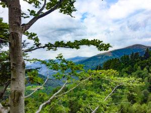 boschi verso il monte san lucio