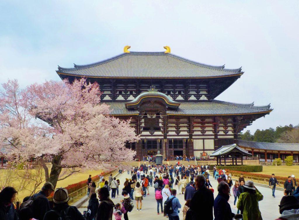 nara giappone todaji con sakura