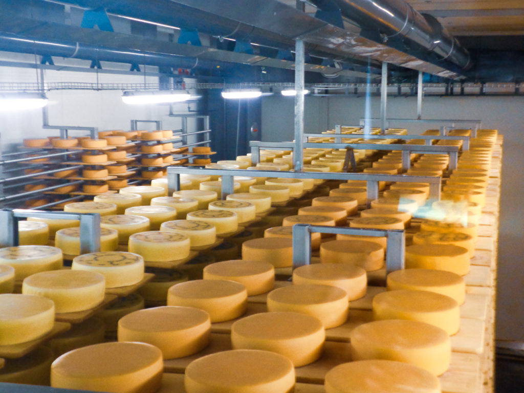 demonstration dairy stein, appenzell (switzerland).cheese