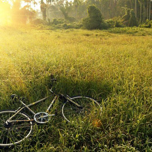 bicicletta al sole