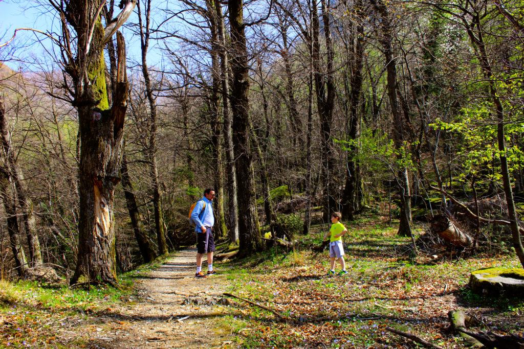 nel bosco sopra Melano
