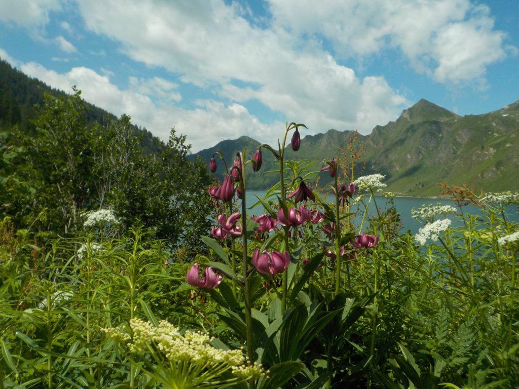 fiori di montagna sul lago