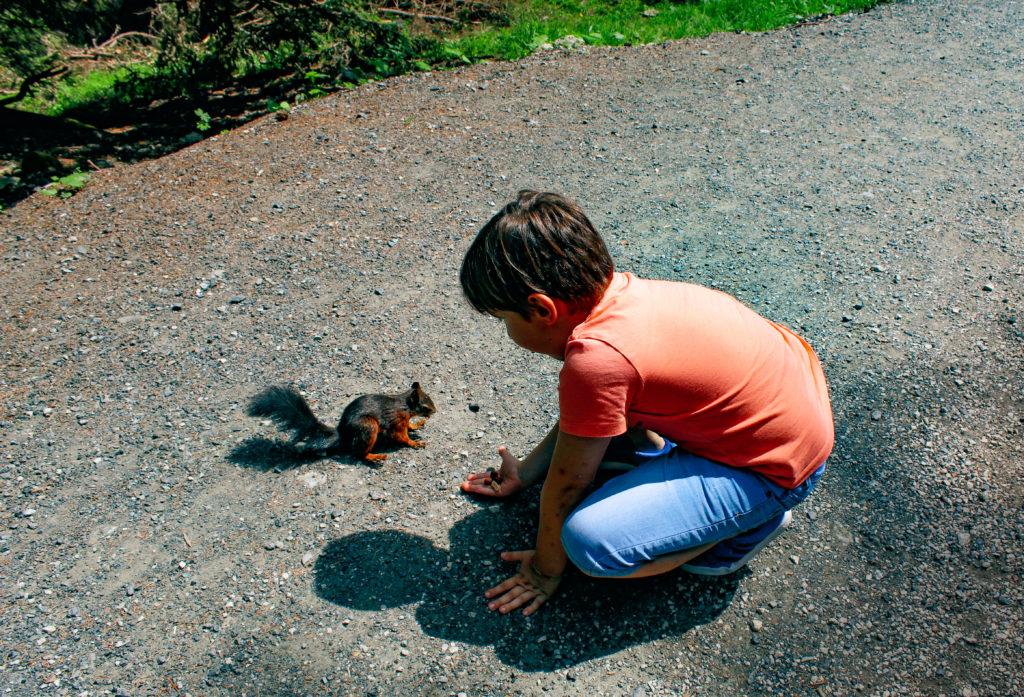 nutrire gli scoiattoli ad arosa