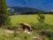 Il parco degli orsi nelle montagne di Arosa, Svizzera