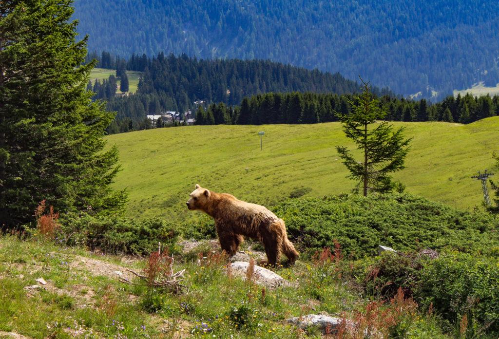parco degli orsi di arosa