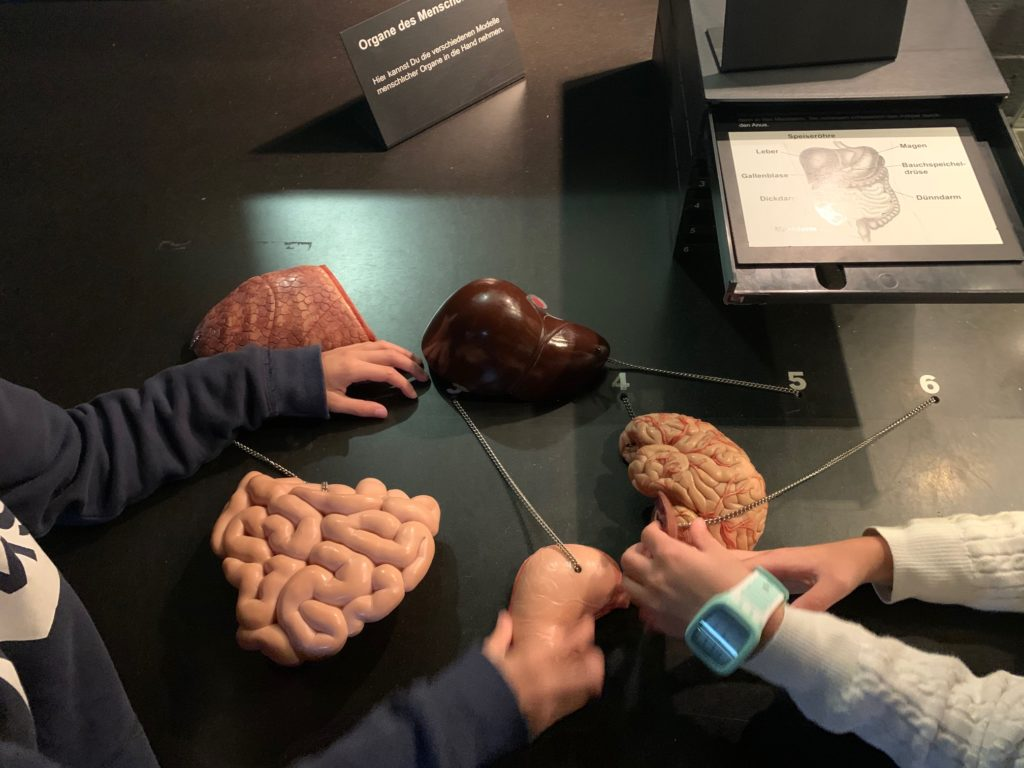 organi corpo umano