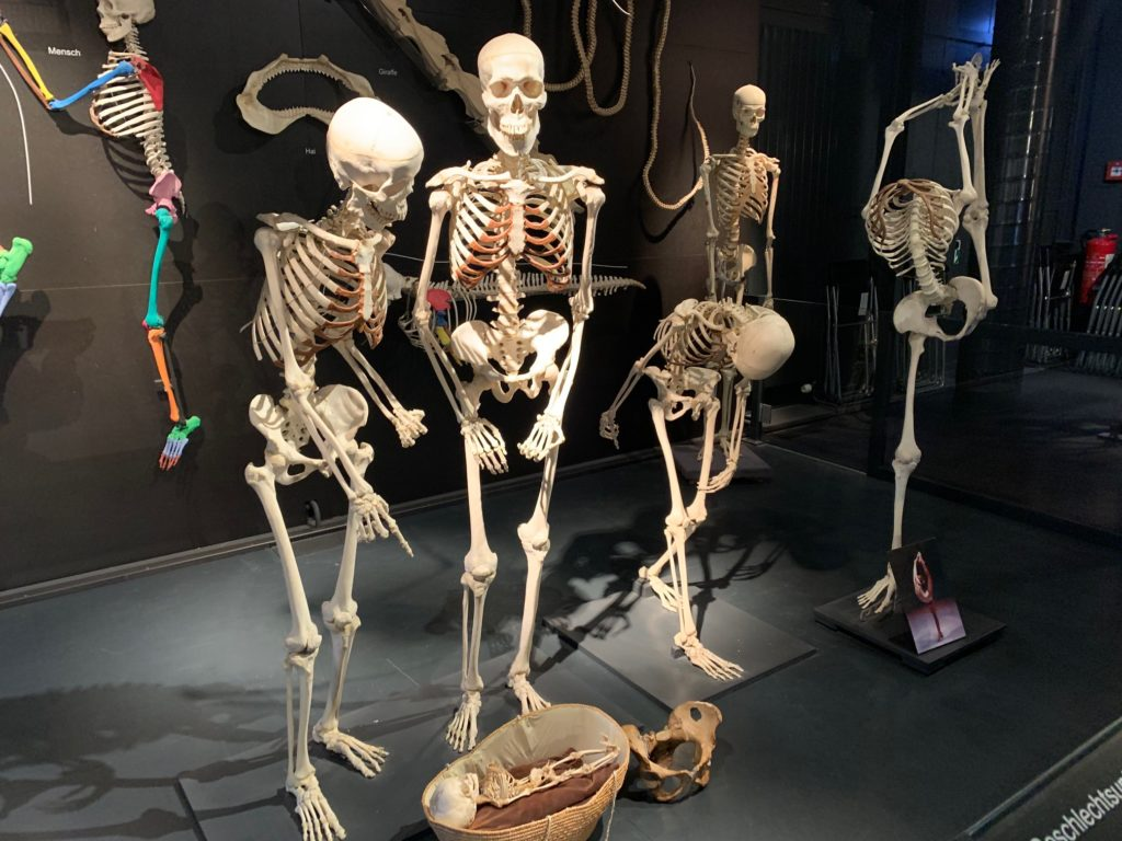 scheletri Kulturama