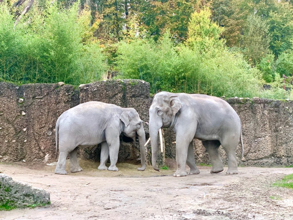 zoo zurigo
