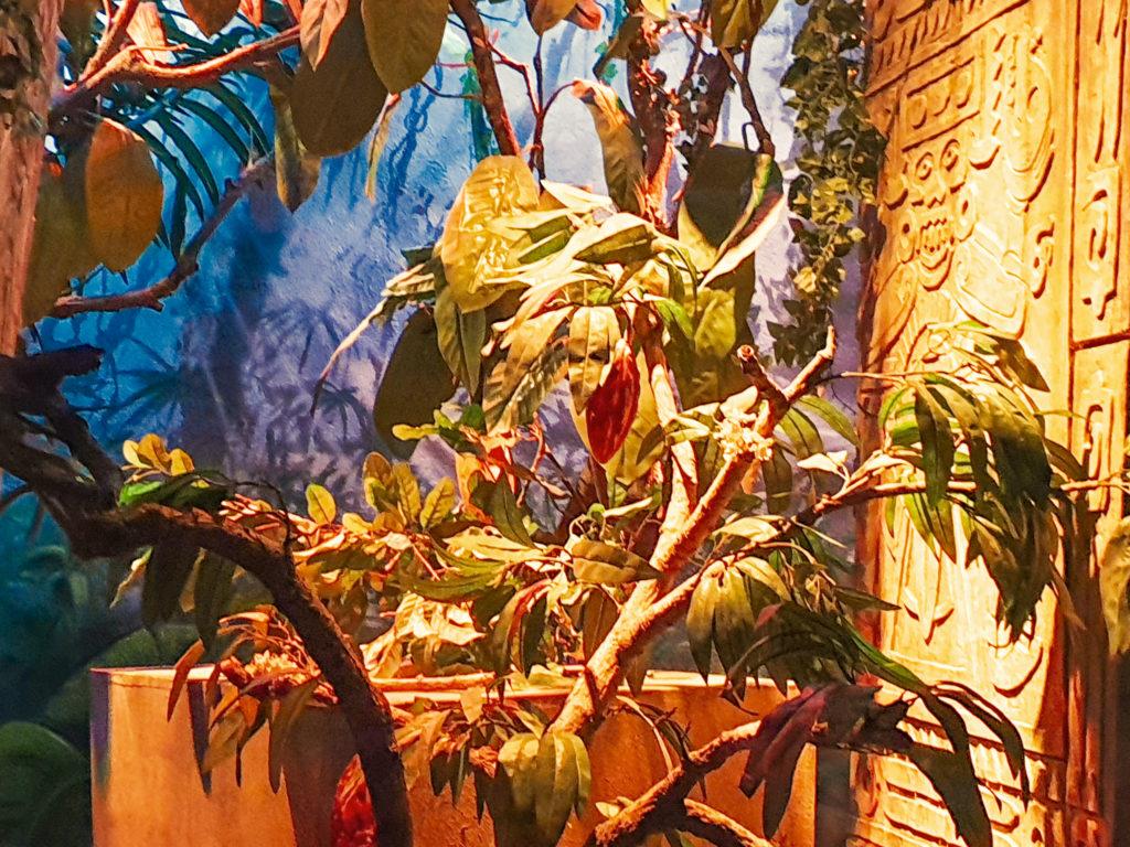 Broc: reperti aztechi e fave di cacao