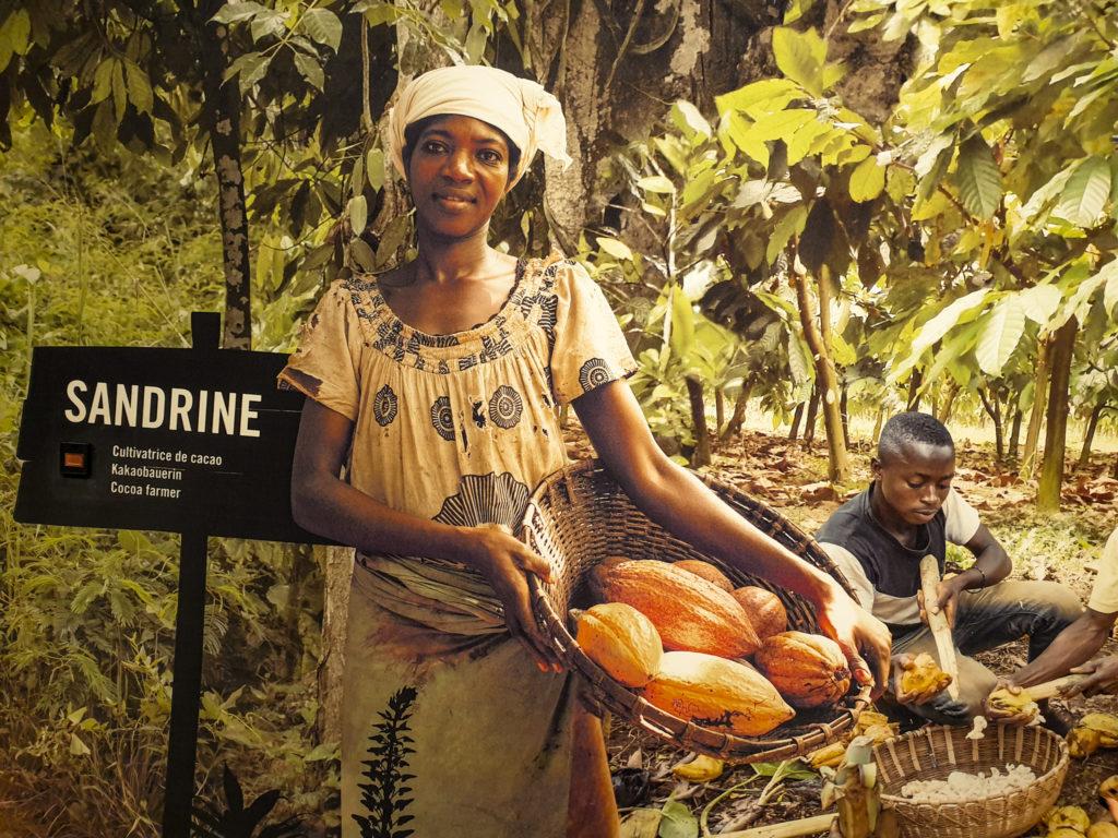Maison Cailler: la coltivatrice di cacao