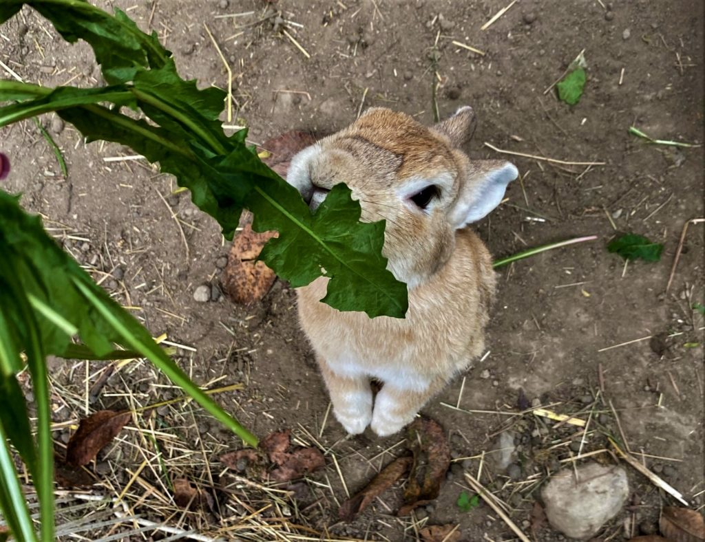rifugio dei conigli