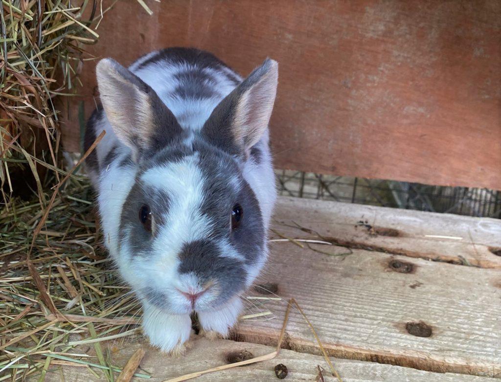 rifugio dei conigli coldrerio