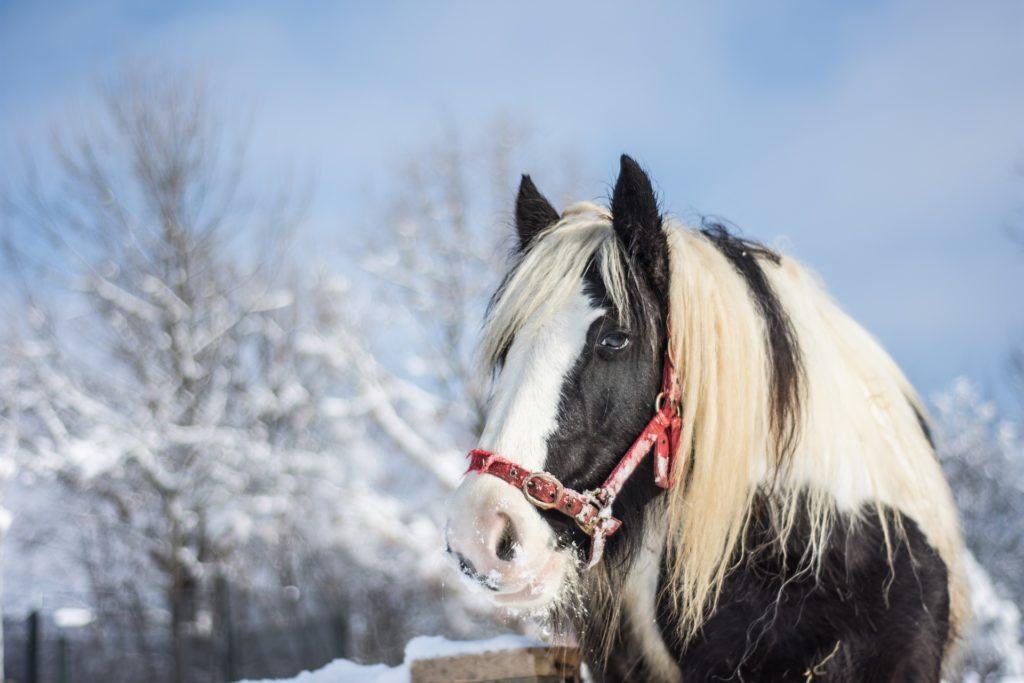 A cavallo anche in inverno