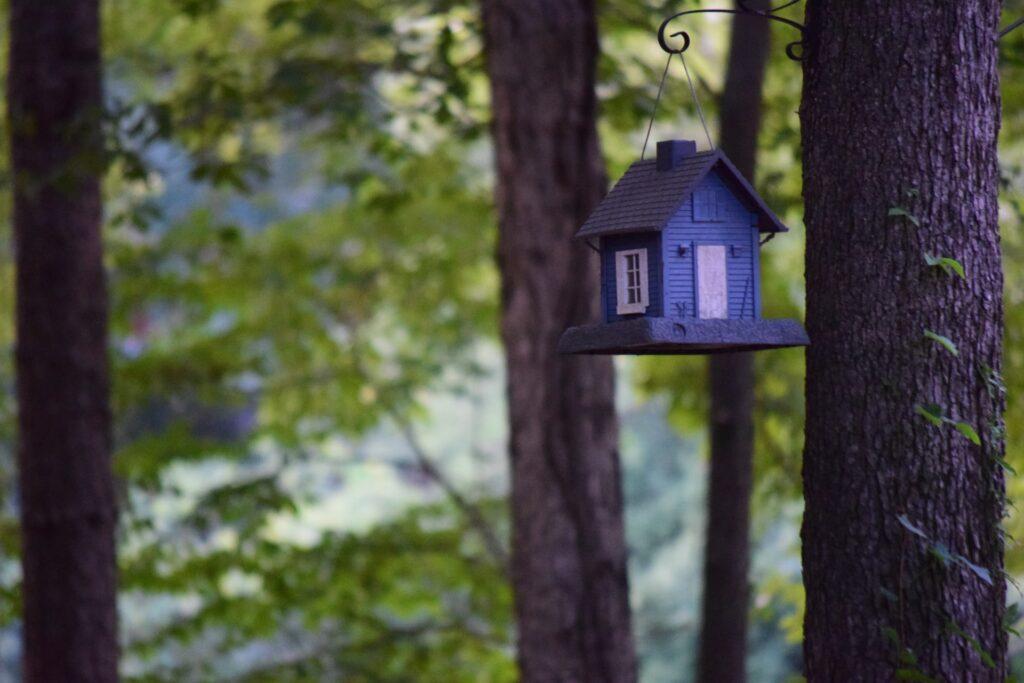 dormire in svizzera casa sugli alberi