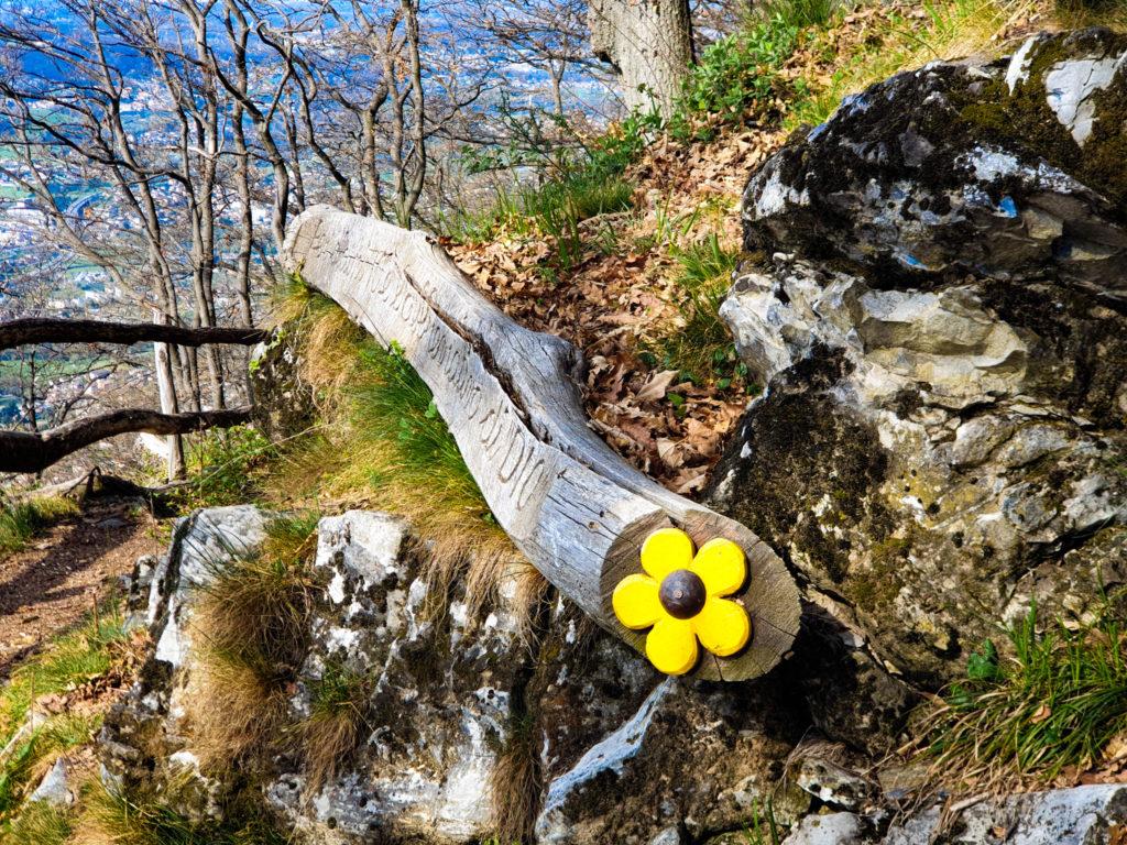 da sagno al bosco saggio, tronco con aforisma