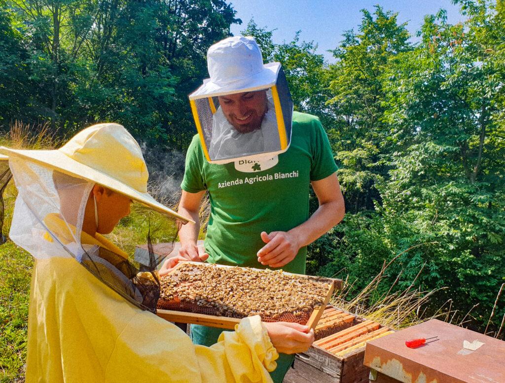 api e apicoltura in Ticino all'azienda bianchi