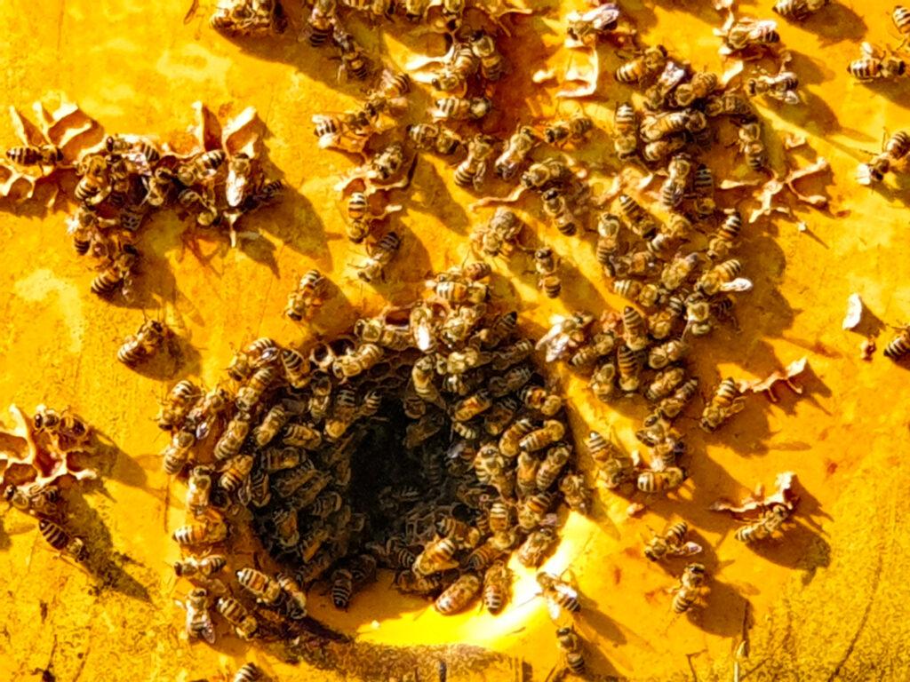 api di arogno, ticino